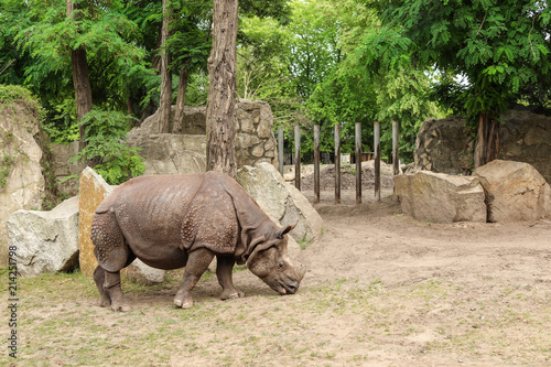 Beautiful rhino in zoological garden. Wild animal