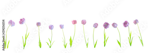 Spoed Foto op Canvas Iris Collage of natural blue flowers tulips isolated.