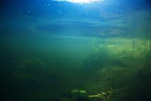 Algae In The Ocean Underwater Photo / Landscape Ecosystem Of The Ocean, Green Algae Underwater