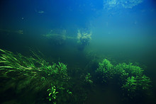 Algae In The Ocean Underwater Photo / Landscape Ecosystem Of The Ocean, Green Algae Underwater
