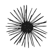 Sea Urchin Vintage Sketch. Isolated Vector