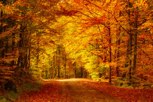 Beautiful Sunny Autumn Landsca...