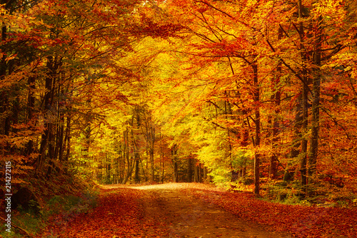 Photo Stands Autumn Beautiful sunny autumn landscape with fallen dry red leaves, road through the forest and yellow trees