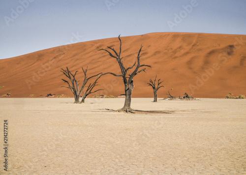 Fotografie, Obraz  Death Vlei Sossusvlei Namibia