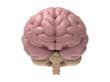 3D realistic brain illustration isolated on white BG