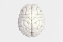 Human Brain In Top View Isolated On White BG
