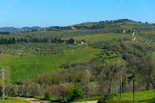 Fotografiet  Panoramic view of countryside and vineyards in the Chianti region, Tuscany, Italy