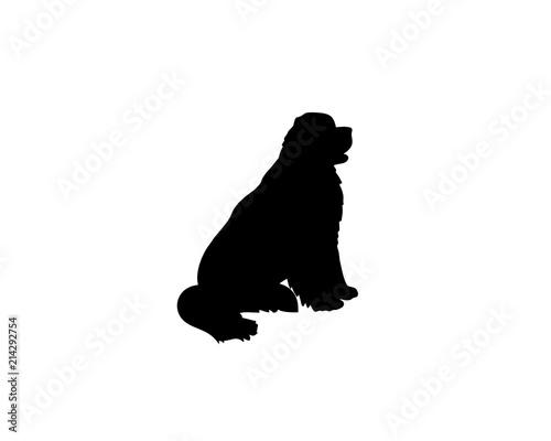 Fotomural Newfoundland dog sitting
