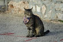 Beautiful Cat With Kerchief In Croatia