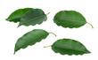 Leinwandbild Motiv green leaf isolated on white background