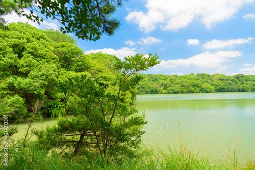 Foto op Plexiglas Lime groen 篠栗九大の森