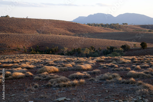 Foto op Plexiglas Cappuccino Stokes Hill lookout South Australia, view of hills with grass clumps at dusk
