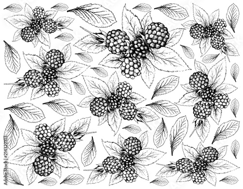 Fényképezés  Hand Drawn of Dewberries on White Background