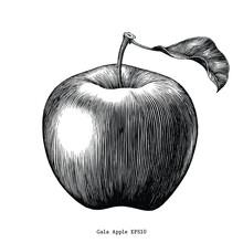 Gala Apple Fruit Drawing Vinta...