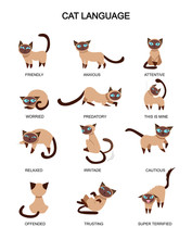 Cat Language And Feelings Mean...