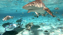 Snorkeling In A Lagoon With Sh...