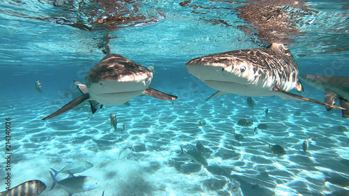 Photo snorkeling in a lagoon with sharks, French Polynesia