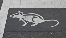Zebrastreifen, Chinatown, Washington DC, USA