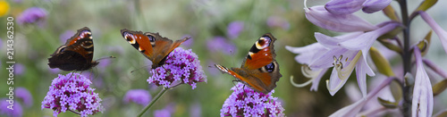 Papiers peints Papillon butterflies on the garden flowers - macro photo