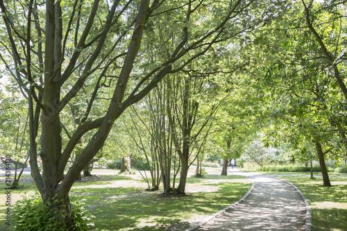 Photo Footpath in Botanical Garden; Copenhagen