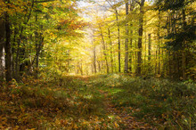 Deserted Forest Trail On A Sunny Autumn Day. Concept Of Exploration And Adventure.