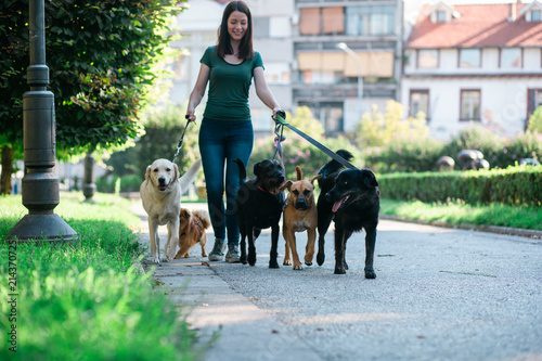 Dog walker enjoying with dogs while walking outdoors.