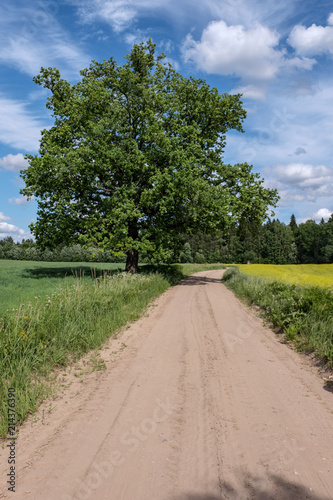 Foto op Aluminium Zalm simple country road in summer