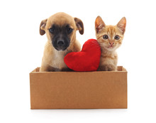 Kitty And Puppy In The Box.