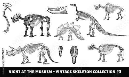 Cuadros en Lienzo Vintage Prehistoric Dinosaur Skeleton Collection