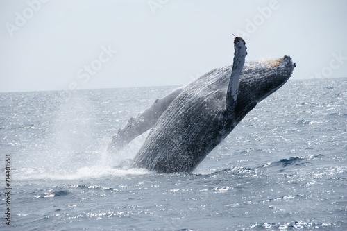 Tuinposter Koraalriffen Breaching Whale