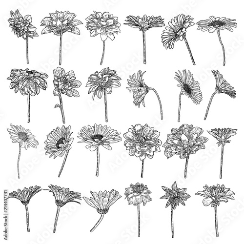 Set of isolated Daisy, Dahlias, Zinnia and Gerbera ink hand drawn flower illustration in black and white plane outline on white background Canvas Print