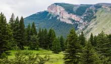 Lush Green Pine Forest With Majestic Mountain Peak In The Distance Near Bozeman, Montana
