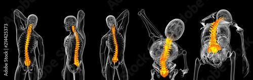 Fotografía  3d rendering of vertebrae
