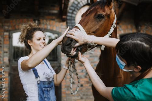 Fotografía Woman veterinary checking horse health in stable