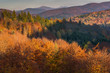 Panoramic vista over colorful trees at fall