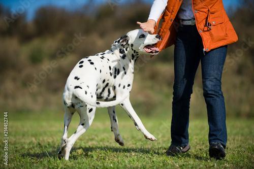 Fotografie, Obraz  Frau wehrt Hund ab