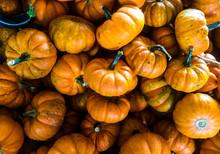 Pumpkin Gourd Gourds Pumpkins Group Batch Many Lot