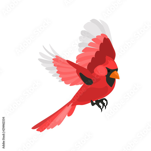 Canvas Print Flying red cardinal high quality color icon