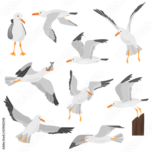 Seagull bird in dufferent motions color flat icons set Wall mural