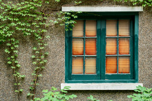 Antique Wooden Window Frame On Stone Wall Facade With Creepers.