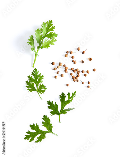 Fototapeta coriander leaf and seeds isolated on white background. top view obraz
