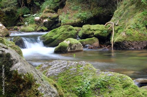 Foto auf Gartenposter Forest river wodospad, woda, rzeka, charakter, potok, bory, krajobraz, zieleń, kamienie, mech, góra, kaskada, opad, creek, opoka, jary, opad, przepływ, beuty, opoka, przepływające, park, piękne, drzew, okolica