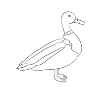Duck Lines. Vector,