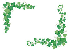 Ivy Green Leaves On Frame Corn...