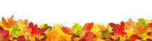 Autumn Leaves Background Copy Space
