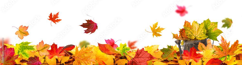 Fototapeta autumn leaves background tendril