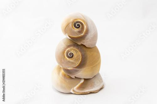 Fotografía Tre conchiglie impilate isolate su bianco