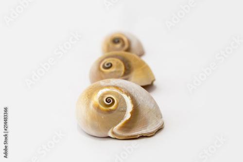 Fotografía Tre conchiglie in fila isolate su bianco
