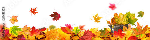 Fototapeta autumn leaves background tendril obraz