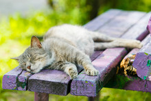 Grey Cat Sleeping On Wooden Be...